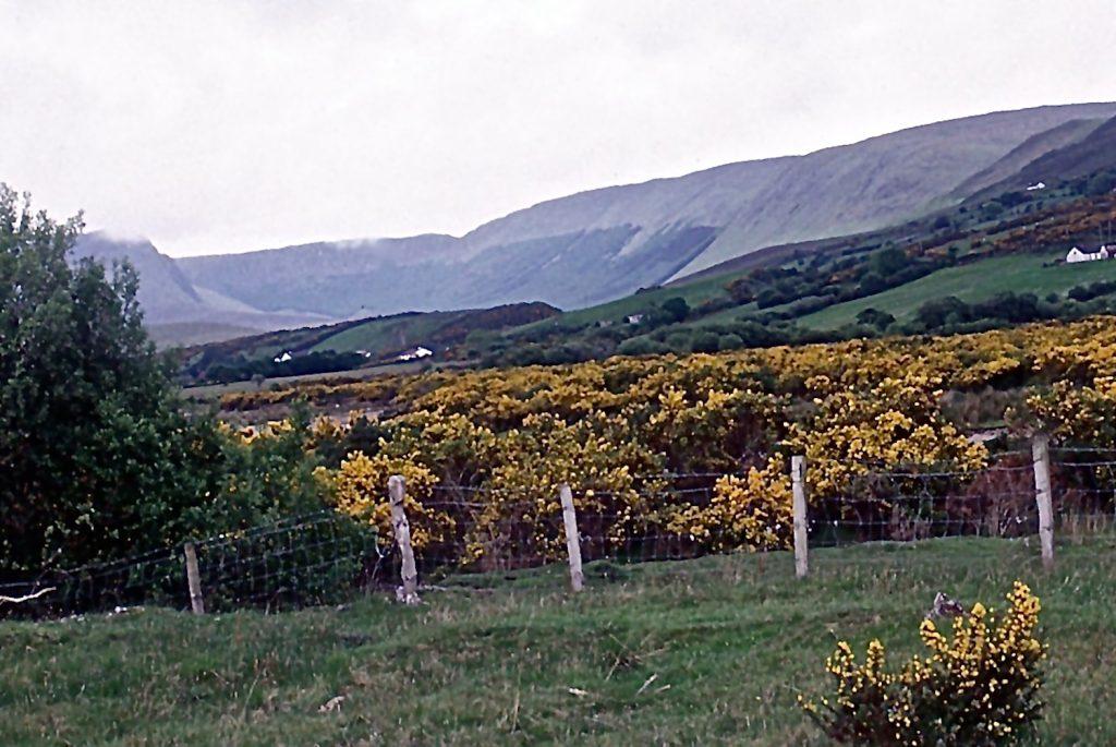 golden-bushes