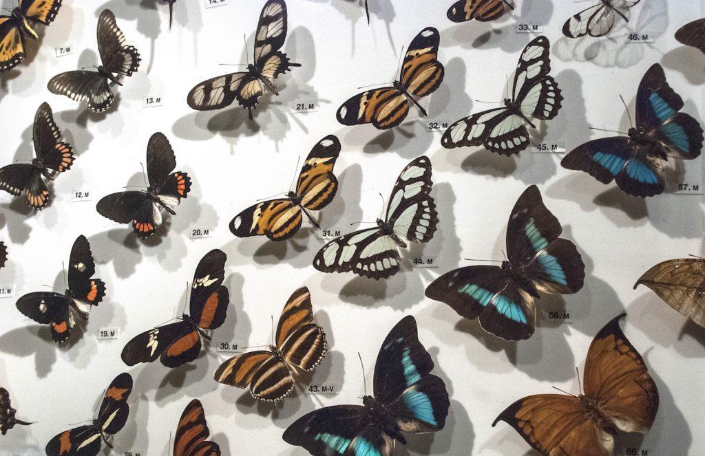 Perth - Butterflies 1