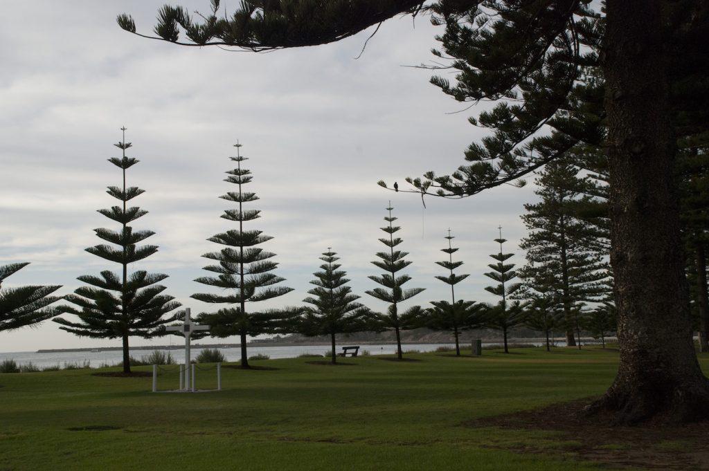 Norfolk Pines at Victor Harbor